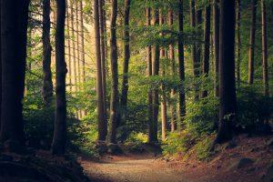 Forest Photo by Lukasz Szmigiel from Unsplash